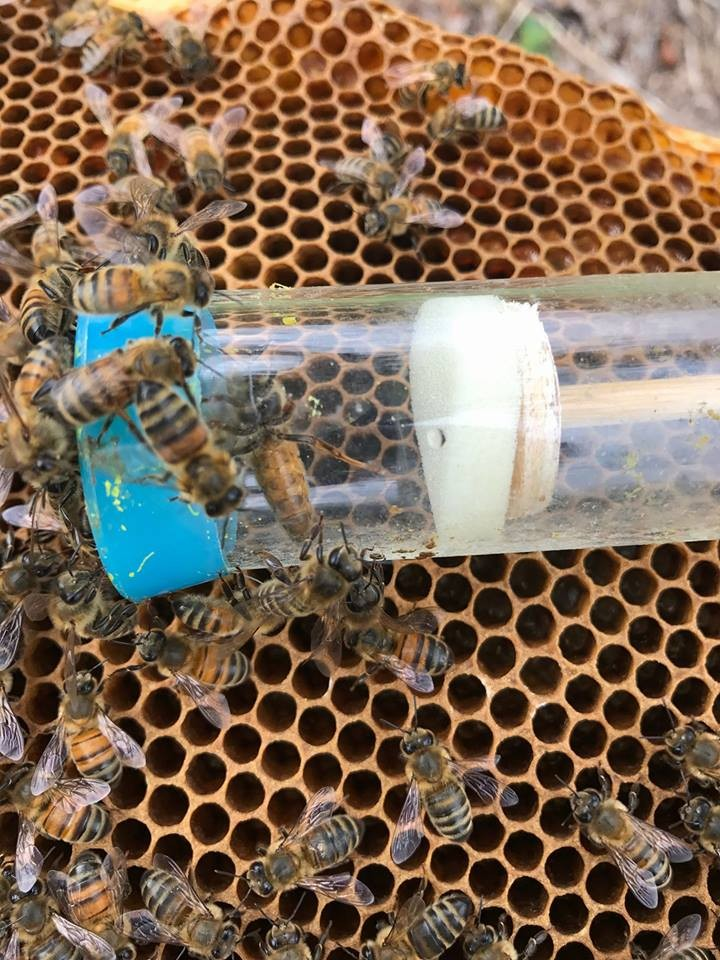 A DECLINING BEE POPULATION around the world is a threat to crops. Locally, the Benton County Honey Bee Swarm Rescue And Removal team is helping reverse that trend. The group recently rescued a swam that had clustered at a Warsaw home.