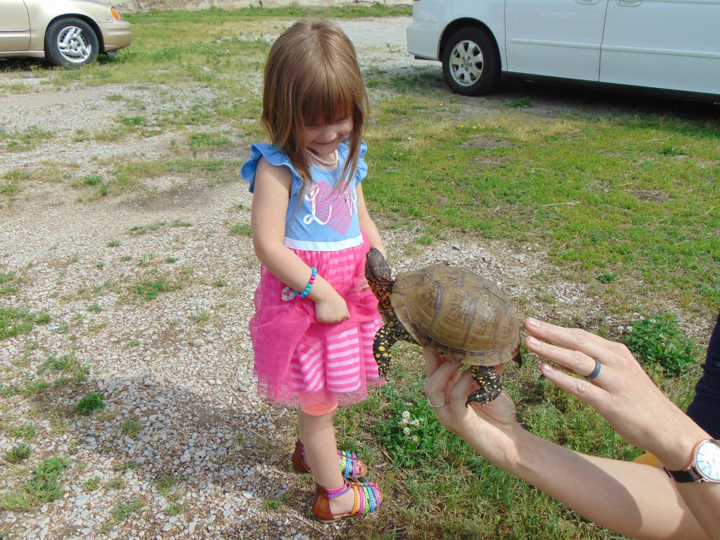 RACING TURTLES can seem a bit paradoxical to some, but the annual Turtle Race during Jubilee Days is a beloved event. Sylvia Waller is entering a tortoise named Will. The young lady named it after her brother and says she expects to take first place.
